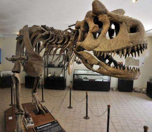 View of the replica of the skeleton of a Carnotaurus on dispaly at the Cretaceous Park in Cal Orcko hill