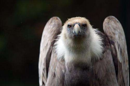 Vultures have special digestive systems adapated to deal with putrid carcasses that would be toxic to many other animals