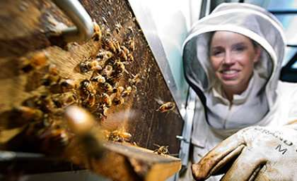 Bee brains offer insights into how human memories form