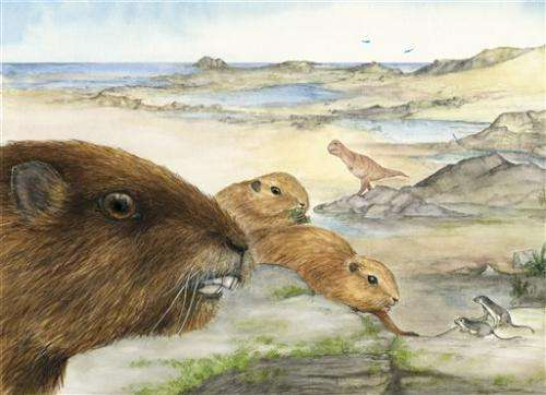 Weird skull from Madagascar reveals ancient mammal