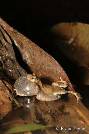 What frog courtship can tell us about human small talk