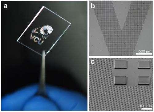 Where biology and nanoscience meet