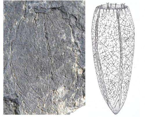 Widespread tetraradial symmetry among early fossil sponges
