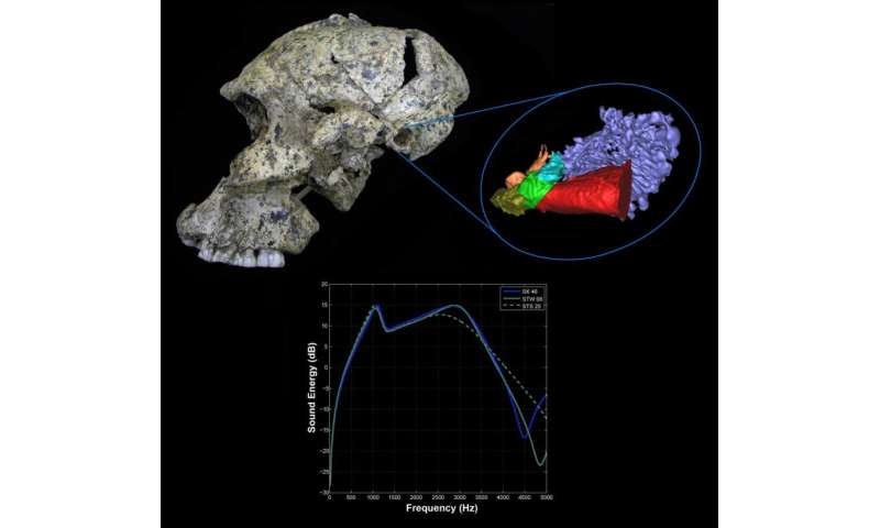 2-million-year-old fossils reveal hearing abilities of early humans