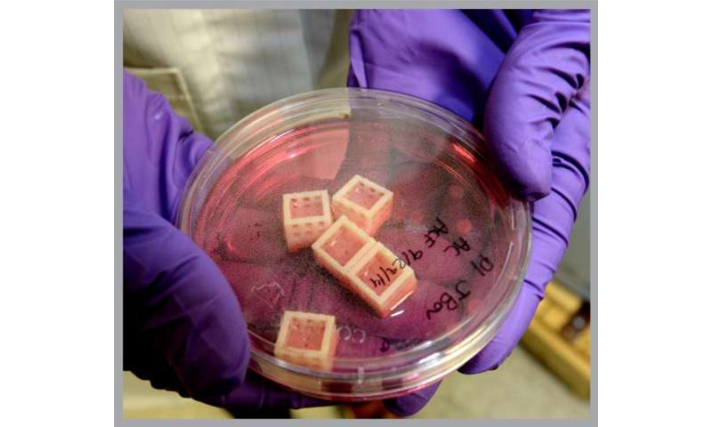 Advancing ways to grow human spinal disc tissue in the lab