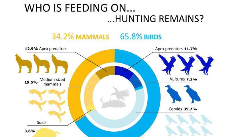 Almost 80 species scavenge hunting remains worldwide