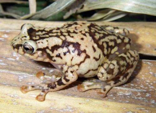 Amphibian chytrid fungus reaches Madagascar