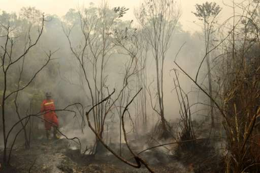 An Indonesian firefighter surveys burning peat land in in the Kapuas district in Central Kalimantan province on Borneo island on