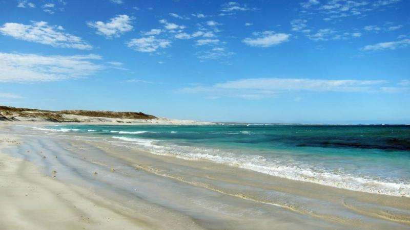 Are you ready to track Gnaraloo's sea turtles?