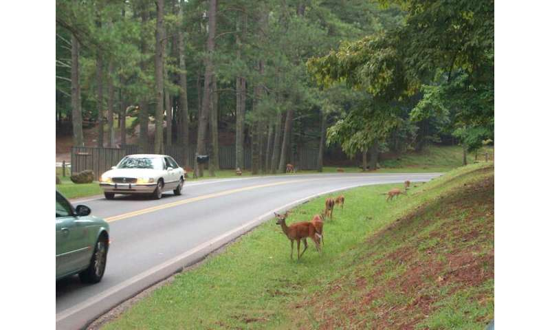 Be on the lookout this fall: Deer-vehicle collisions increase during breeding season