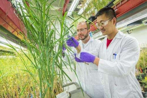 Biofuel proteomics
