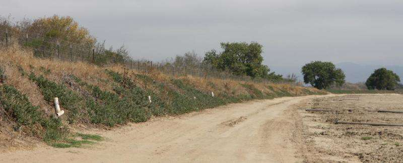 Clearing habitat surrounding farm fields fails to reduce pathogens