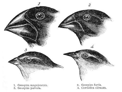 Darwin's finches highlight the unity of all life