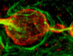 Detailing heterochromatin formation at the onset of life