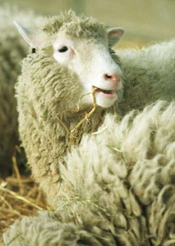 Dolly the sheep was the first mammal to have been successfully cloned from an adult cell, in Scotland in 1996