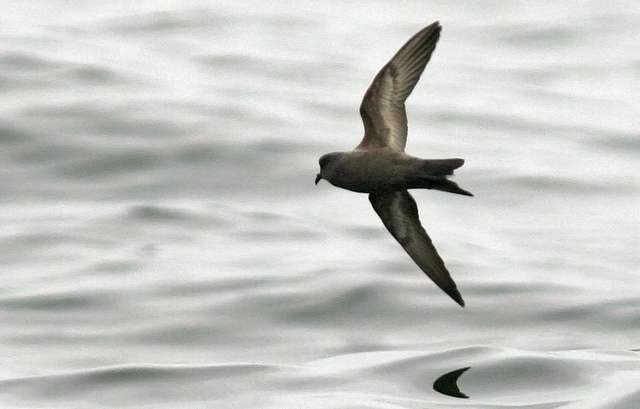 Eavesdropping on seabirds