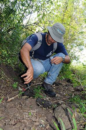 Endangered tortoises thrive on invasive plants