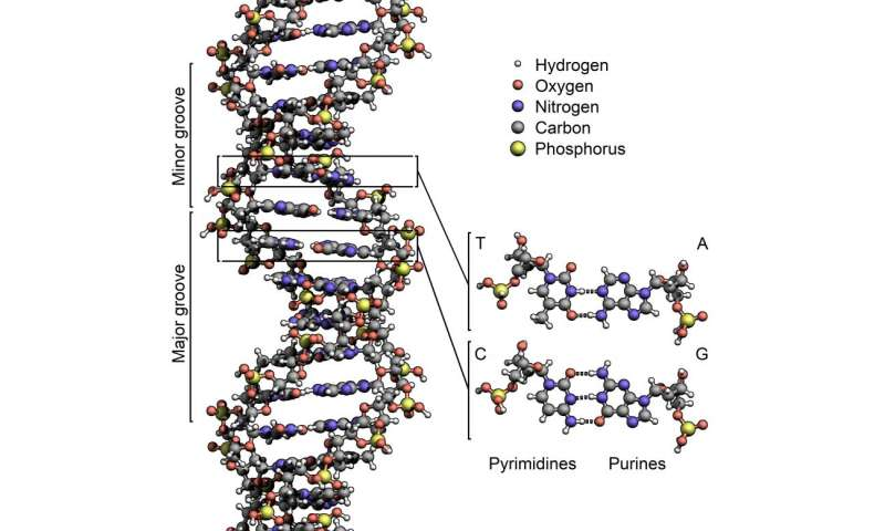 Ether compounds could work like DNA on oily worlds