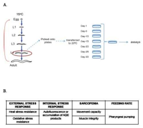 Experimental design for measuring healthspan