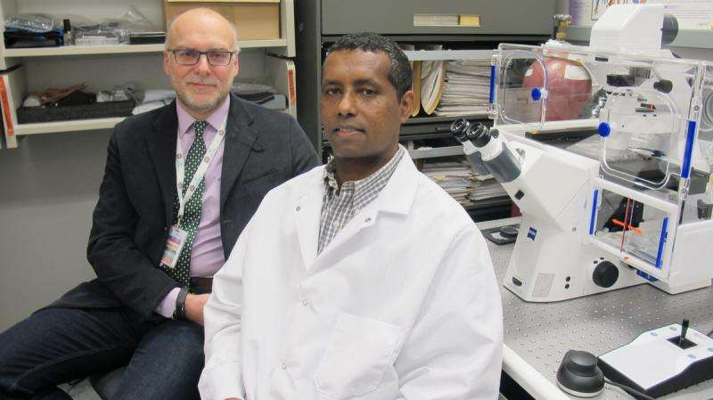 Exploring new paths for the treatment of multiple sclerosis