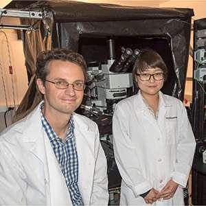 Eye's motion detection sensors identified