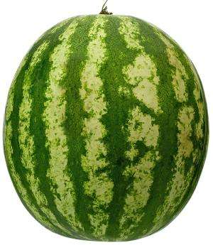 Faster melon breeding thanks to smart combination of techniques