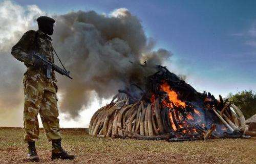 File photo shows a Kenya Wildlife Services (KWS) officer standing near a burning pile of 15 tonnes of elephant ivory seized in k