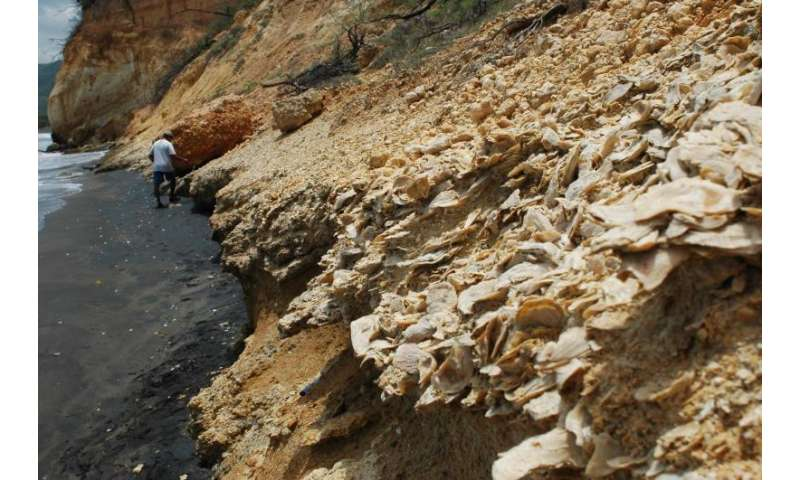 Fossils inform marine conservation