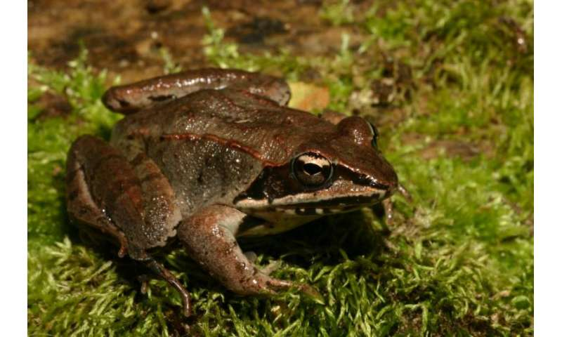 Frogs exposed to road salt appear to benefit then suffer