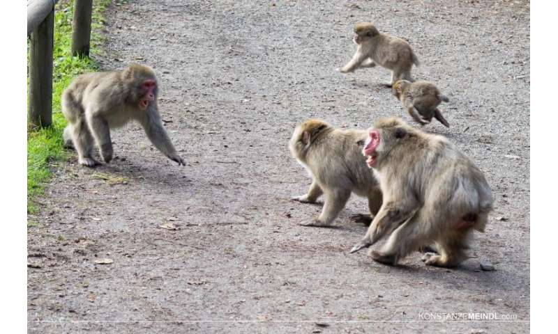 Gene controls stress hormone production in macaques