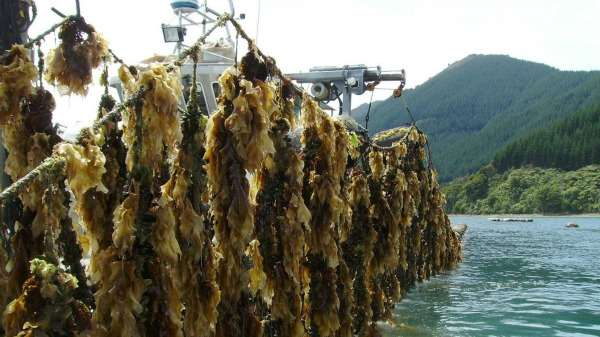 Genetic barcoding system scans marine species for pests