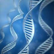 Genetic variant ups risk of graft-versus-host disease in HSCT