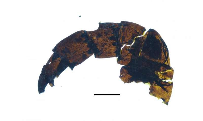 Giant 'sea scorpion' fossil discovered