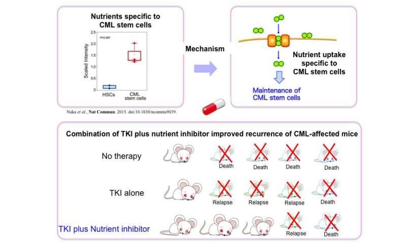 How do harmful chronic myelogenous leukemia stem cells obtain their nutrients?