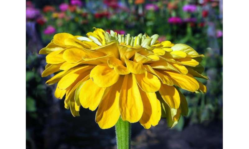 How zinnias shaped a budding biologist, and other fun facts about plants