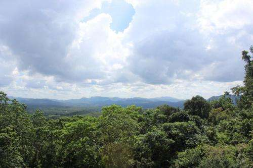 Humans adapted to living in rainforests much sooner than thought
