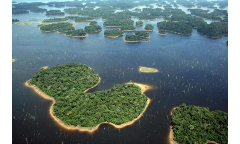 Hydroelectric dams drastically reduce tropical forest biodiversity