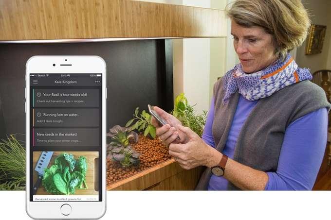 Indoor-grown veggie system is prepared for salad days
