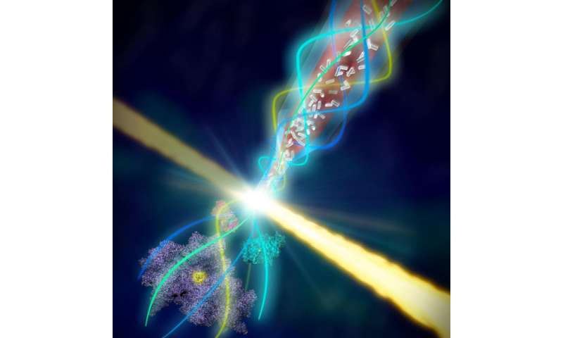 Innovation boosts study of fragile biological samples at SLAC's X-ray laser