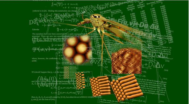 Insects passed 'the Turing Test'