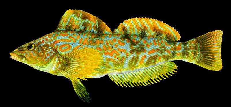 Known fish species living in the Salish Sea increases in new report