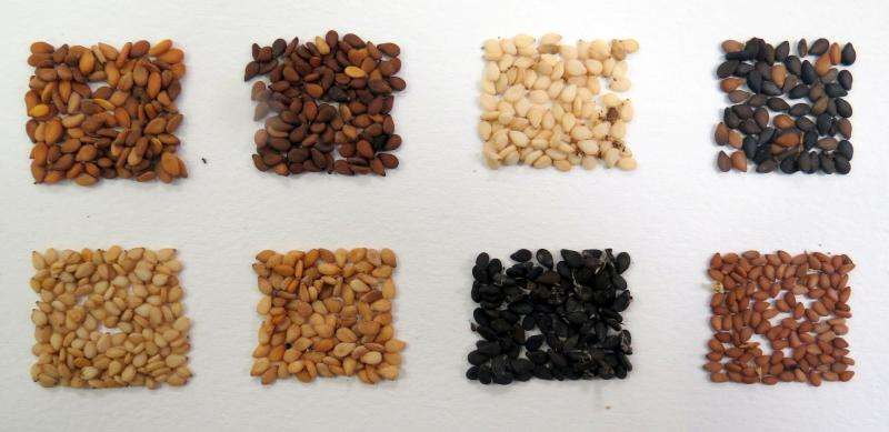 Making sesame seeds a growth area in global food production