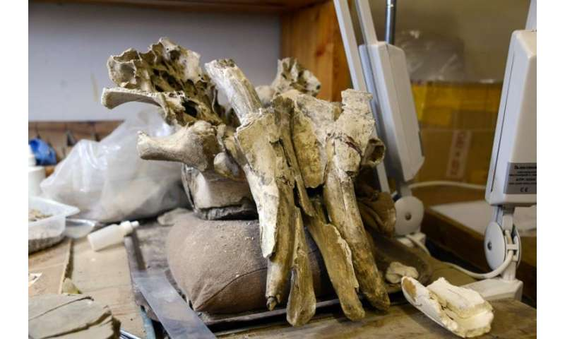 Mammoths might have survived except for bad 'mineral diet'