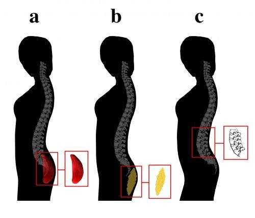 Men's preference for certain body types has evolutionary roots