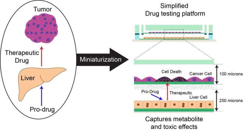 Microfabricated device allows evaluation of the efficacy, toxicity of pro-drugs