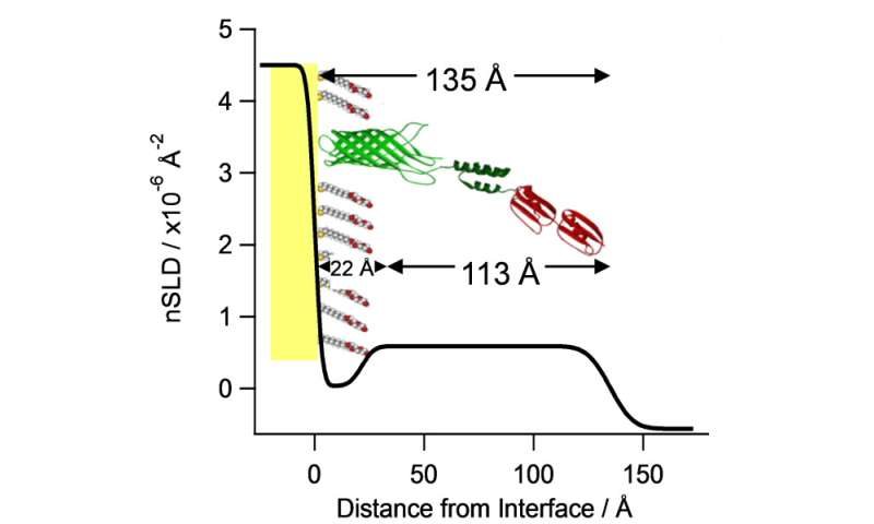 Nanoscale molecular platform used to recognise proteins from the influenza virus