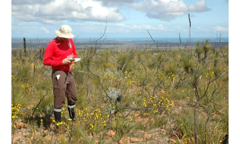 Necessity at the roots of innovation: The scramble for nutrients intensifies as soils age