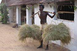 New Ashoka rice variety brings food security to millions