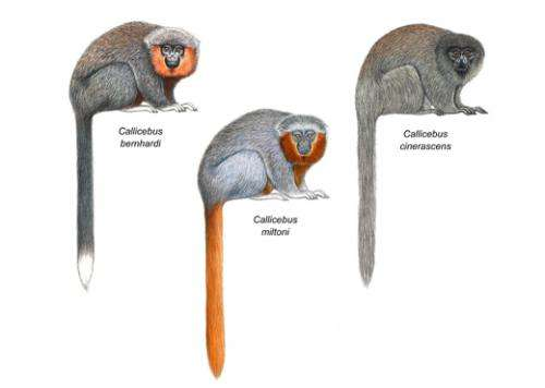 New monkey species discovered in the Amazon rainforest