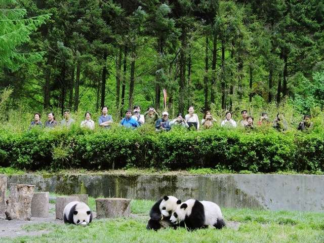 New science redefines remote -- even pandas global